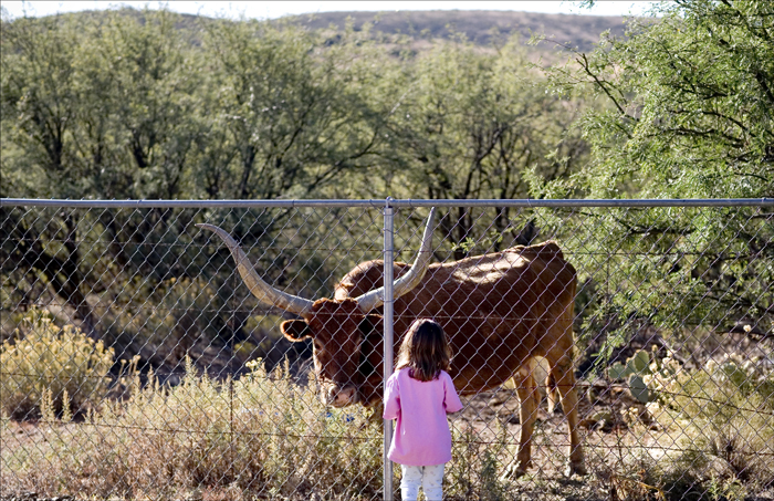natalie and the cow